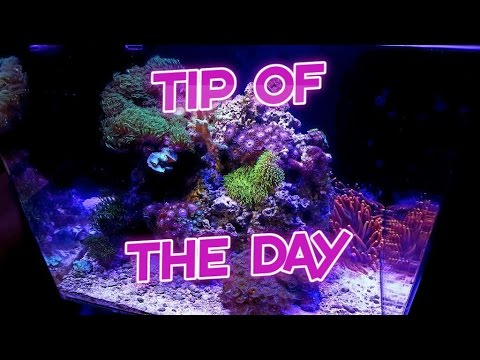 Great way to clean acrylic aquariums