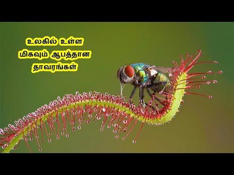 உலகில் உள்ள ஆபத்தான 5 தாவரங்கள் | 5 unbelievable and Dangerous plants in the world | Tamil