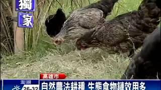 天然「除草雞」 有機自然耕作夯-民視新聞