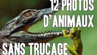 12 incroyables photos d'animaux sans aucun trucage