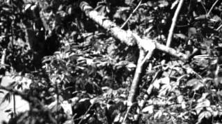 Зеленый дом (1964) фильм смотреть онлайн