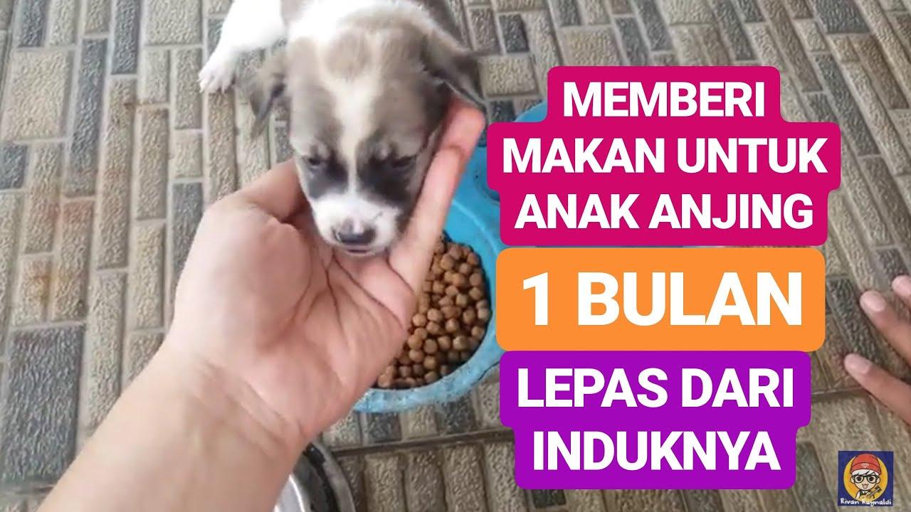 11+ Cara merawat anak anjing umur 1 bulan ideas