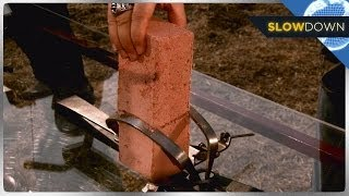 Deadly Animal Traps In Slow Motion!