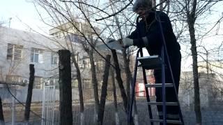 Пилим деревья зимой. 06.02.15г.(, 2015-03-22T06:03:31.000Z)