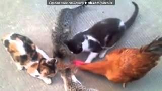 «Со стены TopKot   смешные фотографии котов, кошек и котят» под музыку Время,Позднее время   Не детс