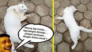 Video Meong Gak Mau Pulang !!, Meong Mau Main Sama Bunda !!!😾😾 - Cat Lovers download MP3, 3GP, MP4, WEBM, AVI, FLV Juli 2018