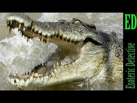Indonesia crocodiles to guard death row convicts