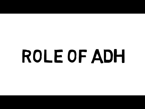 Osmoregulation - Role of ADH (AQA, Edexcel, OCR)