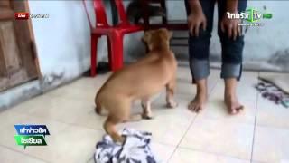 นครศรีฯ ลูกนากเป็นเพื่อนกับลูกสุนัข