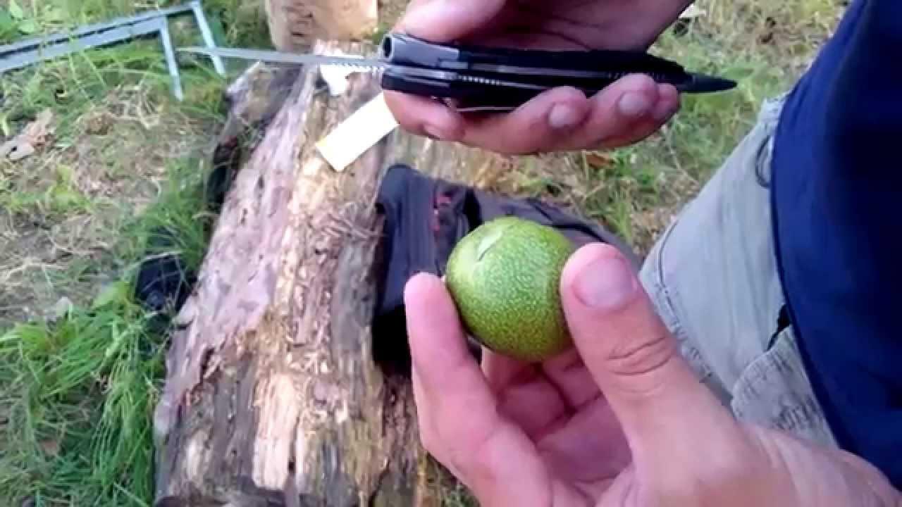 Настойка зелёного грецкого ореха рецепт - YouTube