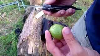 Как есть зеленый грецкий орех.(Как это делается? Как съесть грецкий орех? Многие не в курсе, особенно те кто живет северных регионах, что..., 2014-08-01T12:22:19.000Z)