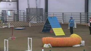 Lucy Chihuahua Agility Dog - First Exc A Std