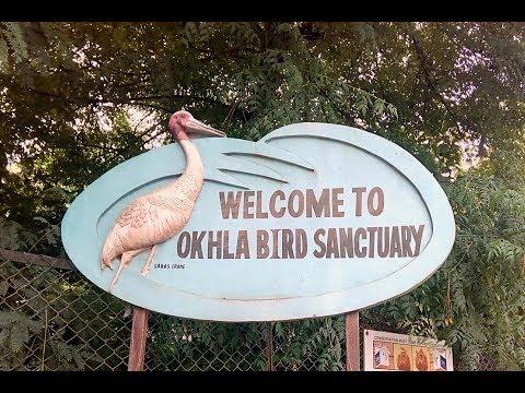Okhla Bird Sanctuary - Vlog