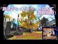 【音声入り】『西連寺と大イチョウ』を訪ねて(常陸高野) Sairenji Temple in Japan