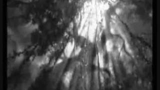 Tarzan, Jane and Clayton; Through My Eyes
