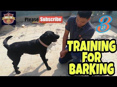 Labrador dog training 3- BARKING by DOGGIE ZONE