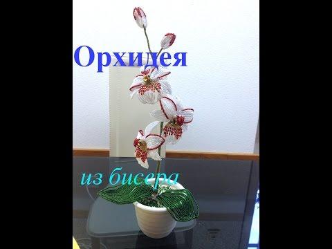 Бисероплетение орхидеи видео урок бесплатно