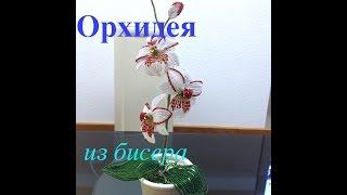 ОРХИДЕЯ ИЗ БИСЕРА. Часть 1/5. Beaded orchid. DIY. БИСЕРОПЛЕТЕНИЕ ДЛЯ НАЧИНАЮЩИХ