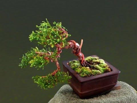 Miniature Bonsai Mame 21 Youtube