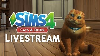 INTERACTIVE VET CLINIC LIVESTREAM / The Sims 4 Cats & Dogs