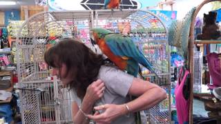 H-T VIDEO: Birds Of Paradise On Holmes Beach