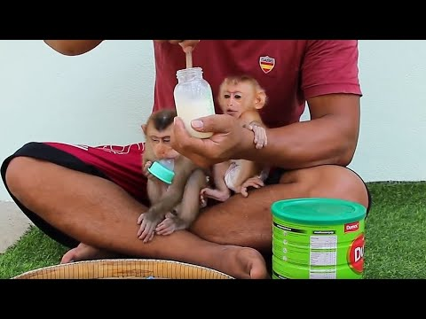 Lyly Boki Get Up First Finding Milk| Baby Monkey Daily Life| Lyly Boki Routine Day