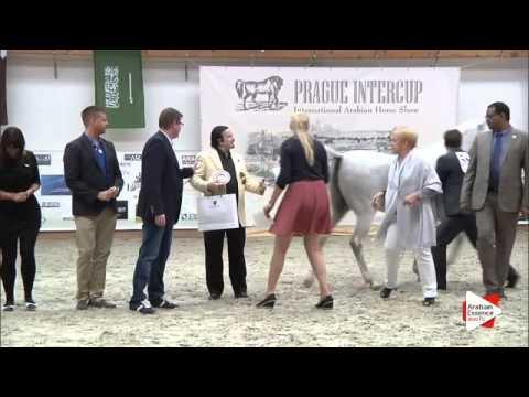 N 58 ELLISEINA   Prague Intercup 2015   PEC   Senior Females Championship Class 19 2nd place