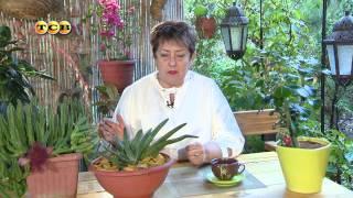 Самые неприхотливые растения – суккуленты - Цветочная лавка