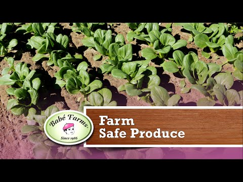Specialty Produce News: Farm Safe Practices for Your Restaurant Guests