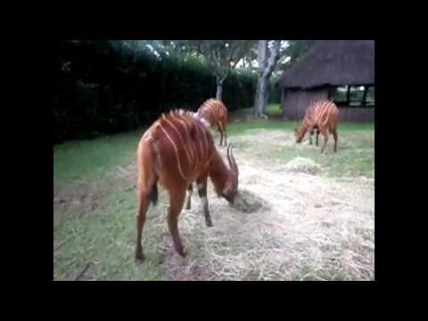 Exotic Wildlife Of The Mount Kenya Game Ranch 2016 Part 2