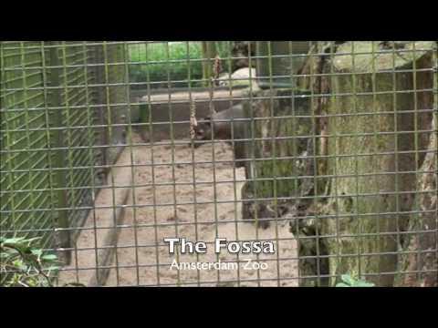 Europe Zoo