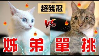 【豆漿vs俊榮】 姊弟單挑! 賭上我一姊的名號