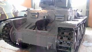 кошка и танки.mpg