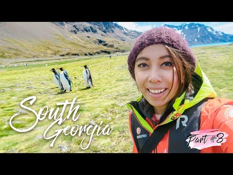 The BEST Place for Wildlife Viewing! (Part 3 of 7 ~ Antarctica Expedition) 🛳