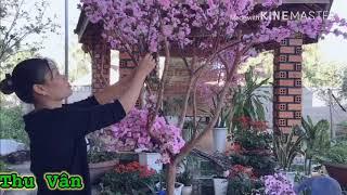 Cách làm cây Hoa Anh Đào Trang Trí Tết 🧧. Cánh làm cây Hoa Anh Đào cực Đơn giản mà đẹp