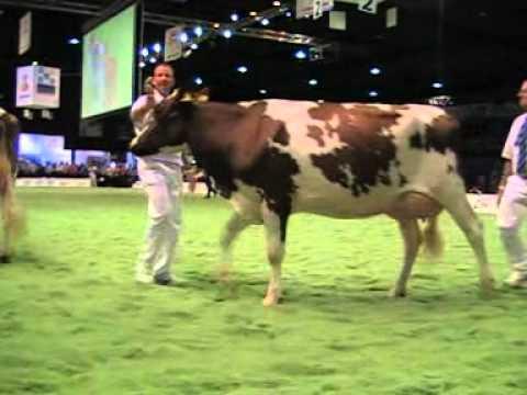 Holstein Master Sale Nr. 08