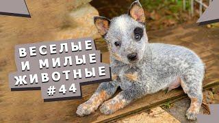 Подборка видео с животными 44 Video collection with animals