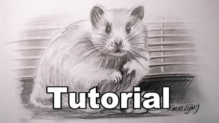 How to draw a Hamster / animal drawings / #28