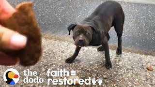 Woman Tries to Rescue a Stray Pittie Every Day for 3 Weeks | The Dodo Faith = Restored