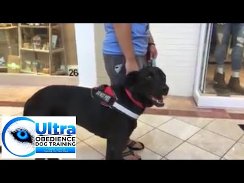 service-dog-training-+-ultra-obedience-dog-training-+-palm-beach-county