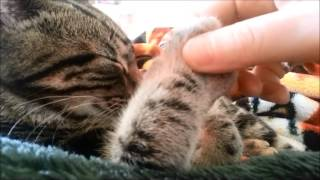 Jasper Shows Just How Tolerant He Is By Purring Away - Cute Pets 2015