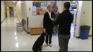 Cbc Ottawa: Therapy Dog