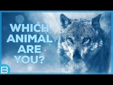 which-animal-are-you?