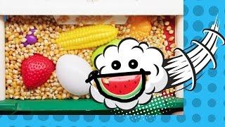 Speech Therapy - Farm Foods - YakBack Preschool #5