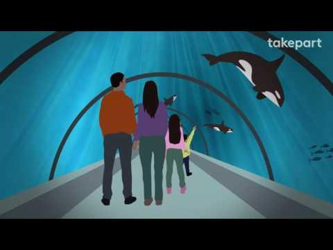How SeaWorld's Orcas Could Go Home Again | CAPTIVE | TakePart