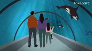 How SeaWorld's Orcas Could Go Home Again   CAPTIVE   TakePart