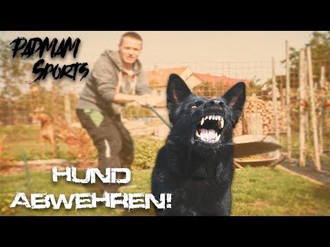 Wenn Ein Agressiver Hund Attackiert! 😱 #Pfefferspray Abwehr ⛔