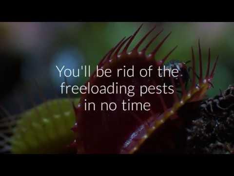 Pest Control Melbourne - call us now 03 9088 7658