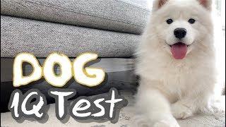 내 강아지는 얼마나 똑똑할까? 강아지 아이큐테스트! 여러분도 함께 해보세요