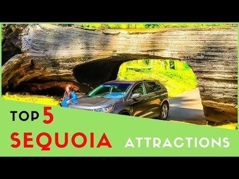 Top 5 Attractions in Sequoia National Park